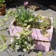 木箱に寄せ植え(3月)